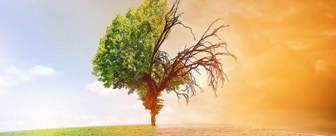 Klimawandel - nachhaltige Finanzierung - Frankfurter Erklärung